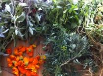 Sage (Salvia officinalis), calendula (Calendula officinalis), rue (Ruta graveolens), lemon balm (Melissa officinalis), wormwood (Artemisia vulgaris).